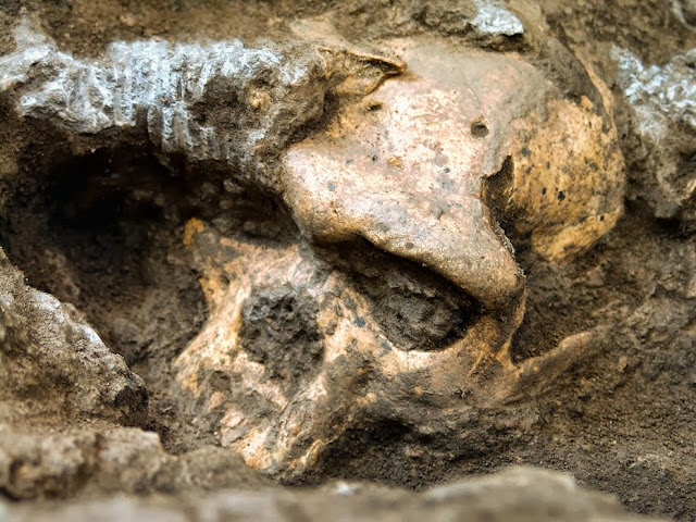 """Researchers, led by Georgian National Museum anthropologist David Lordkipanidze, first found the complete lower jaw of a fossil human in 2000. The cranium turned up five years later, at the fossil-rich Dmanisi site 96 miles southwest of Tbilisi, and is now being reported in the journal Science.  """"It was discovered on August 5, 2005—in fact, on my birthday,"""""""