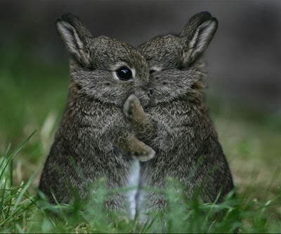 Animals Hugging Seen On www.coolpicturegallery.us