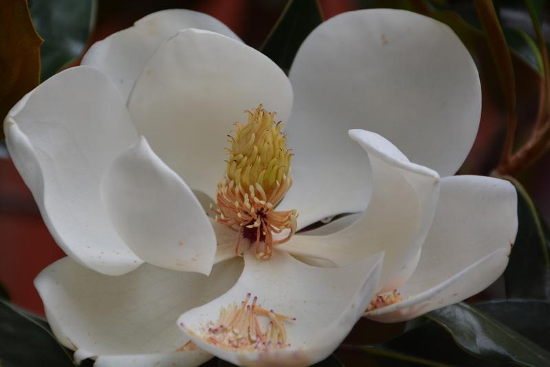 木蘭の画像 p1_31