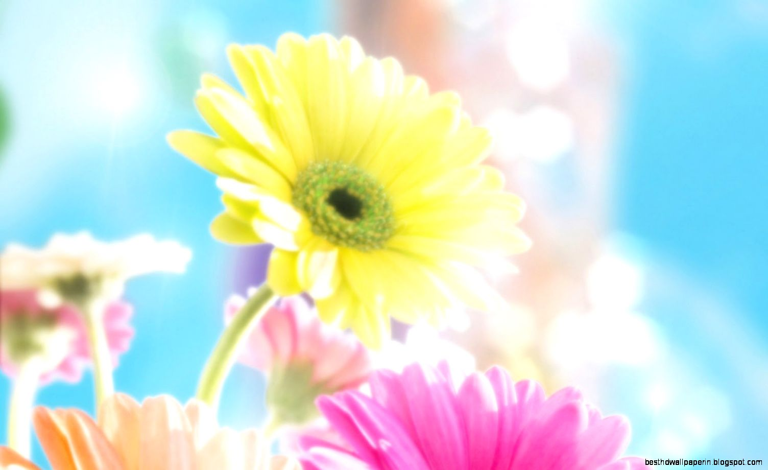 Animated Spring Flowers Screensavers Best Hd Wallpapers