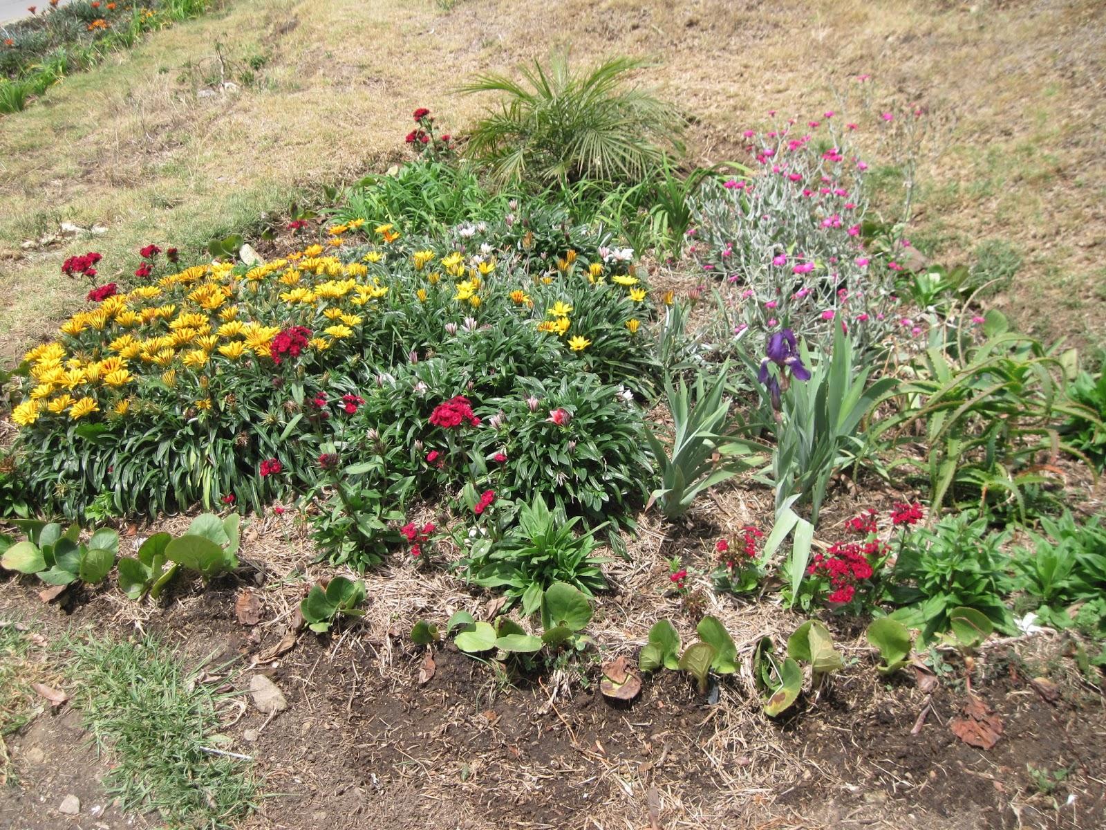 Vivero casona la colina nuestras plantas ornamentales for Viveros en colina