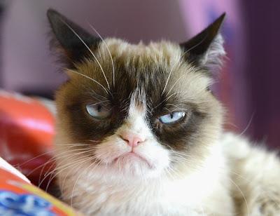 Na imagem: um gato olhando com cara de puto