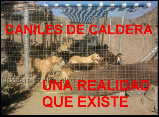 Perros de Caldera