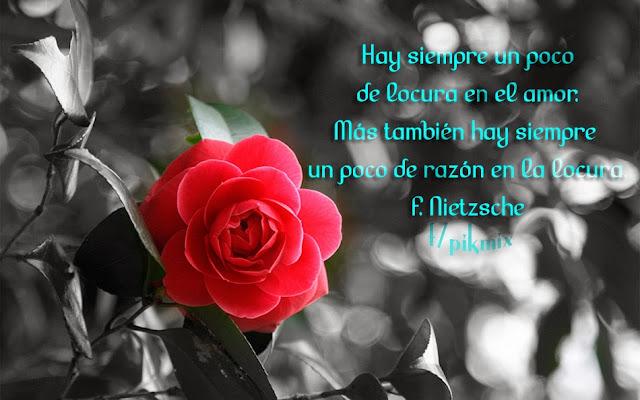Locura en el amor: F. Nietzsche ● Frases de amor  ● rosas rojas