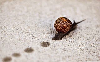 free hd images of snail track macro for laptop