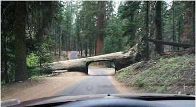 Insólito tunel natural en un parque de California
