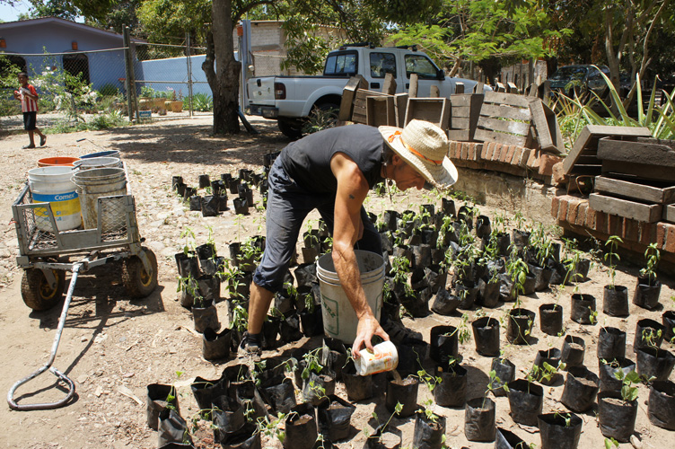 San Pancho Community Garden: Hot Compost and Water Rationing - Hot Composting and Water Rationing