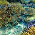 Selamatkan Terumbu Karang Karimun Jawa (Coral Day)