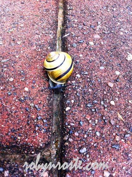snail on red brick