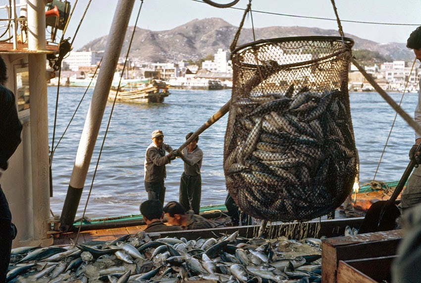 Next big future fishing provides key jobs and nutrients for Fishing guide jobs