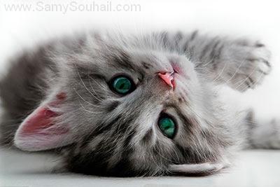 القط الجاسوس آخر إختراعات وكالة الاستخبارات المركزية الـ CIA الأمريكية