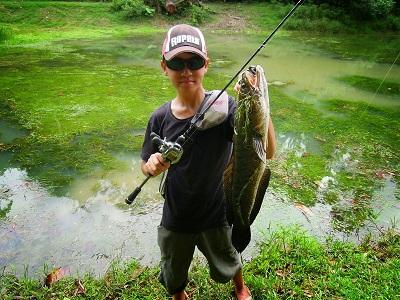 Cần câu cá lóc tốt nhất