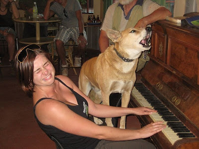 Dingo dog singing