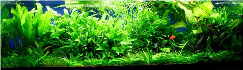 produits anti algues engrais pour aquarium conditionneur eau pour aquariums engrais maison aqua mio