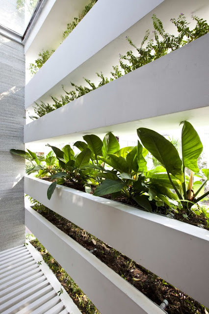 Close up photo of vegetation growing on the facade as seen from the inside