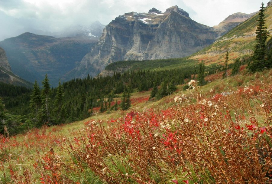 east glacier park latino personals It's easy to experience the epic views of glacier national park without dealing  with the stress of driving just take the train getting from whitefish to west or east .