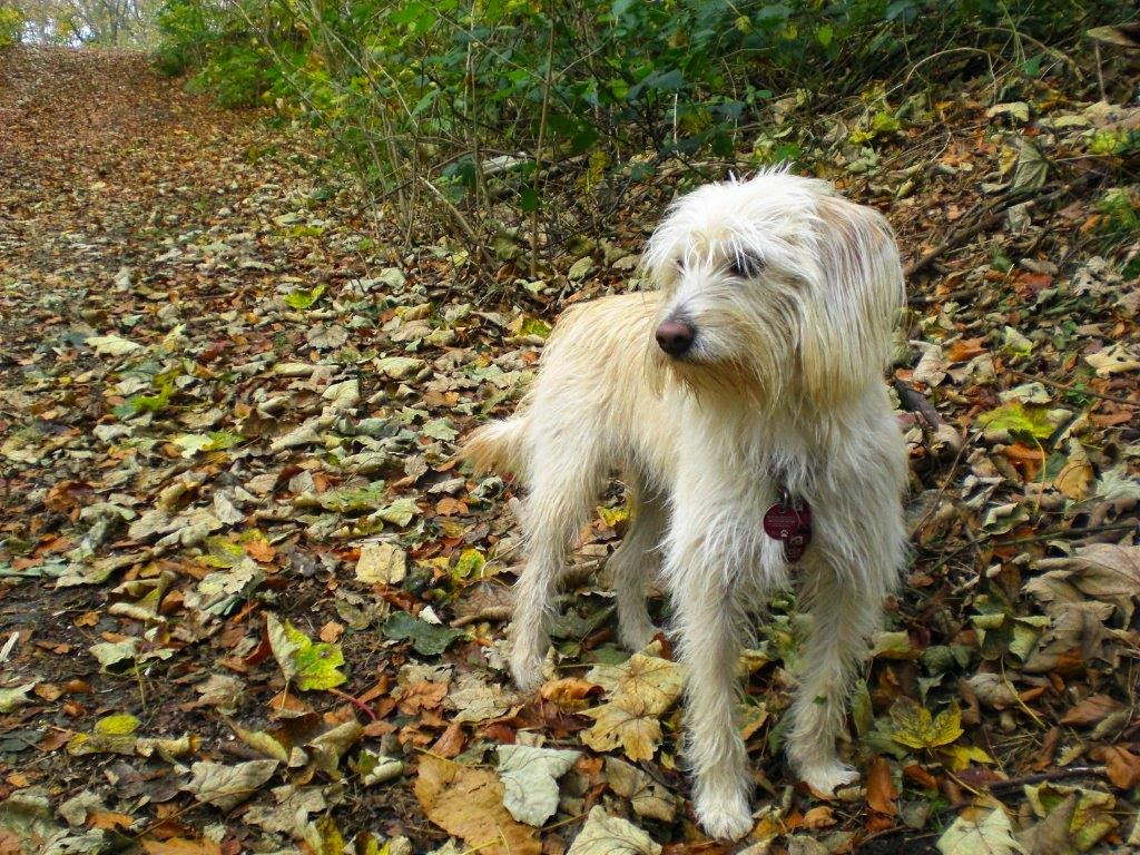 Hunderunde Herbst Wald Blätter Mina Straßenhund
