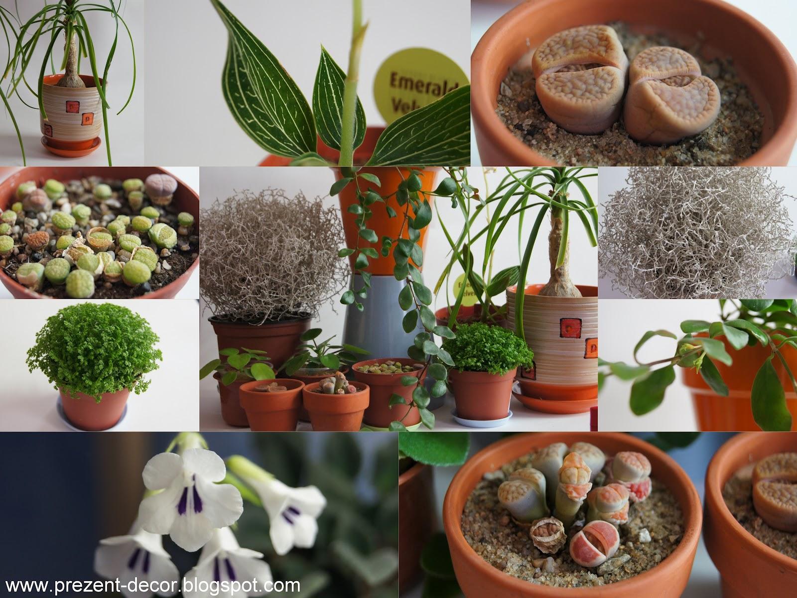 Не экзотические комнатные цветы фото и названия