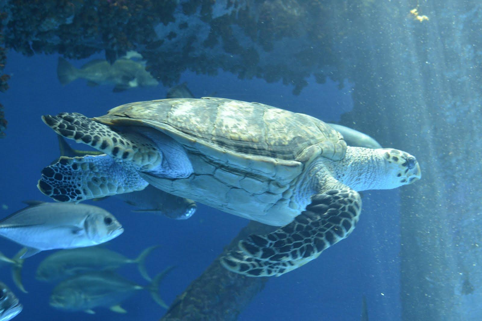 Image Result For Texas State Aquarium