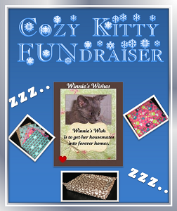 Cozy Kitty Fundraiser