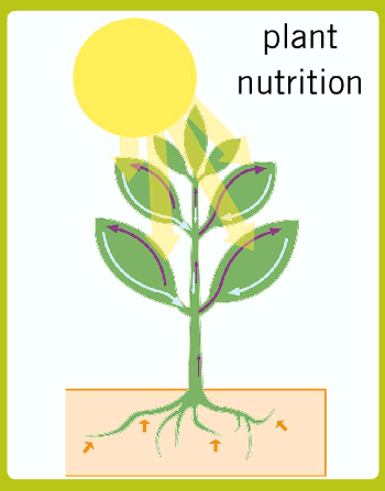 plant nutrition Plant nutrition when the nutrients around the root zone are depleted, plants  suffer without regular nutrients, growth slows, flowering is inhibited, and the  plant.