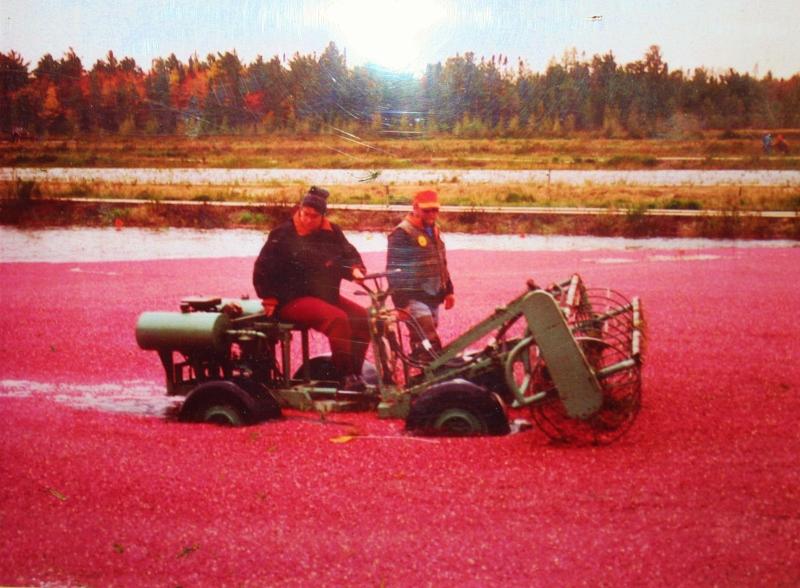 Birch Lodge Blog: The Centennial Cranberry Farm
