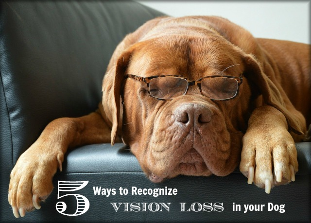 5 Ways to Recognize Vision Loss in Dogs