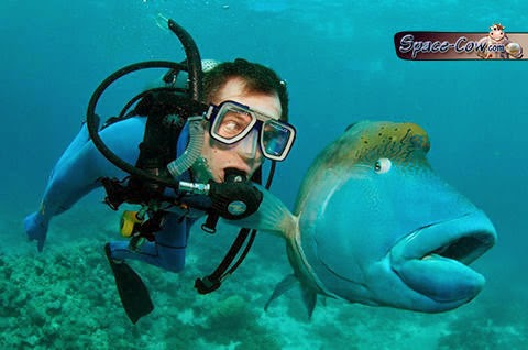funny animals fish picture