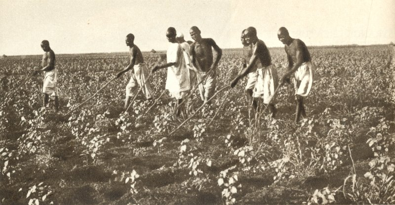 United States - Cotton