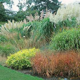 Absolutely bushed ornamental grass a low maintenance for Grasses for garden borders