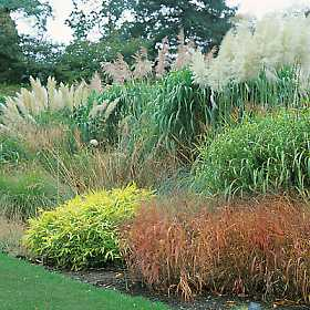 absolutely bushed ornamental grass