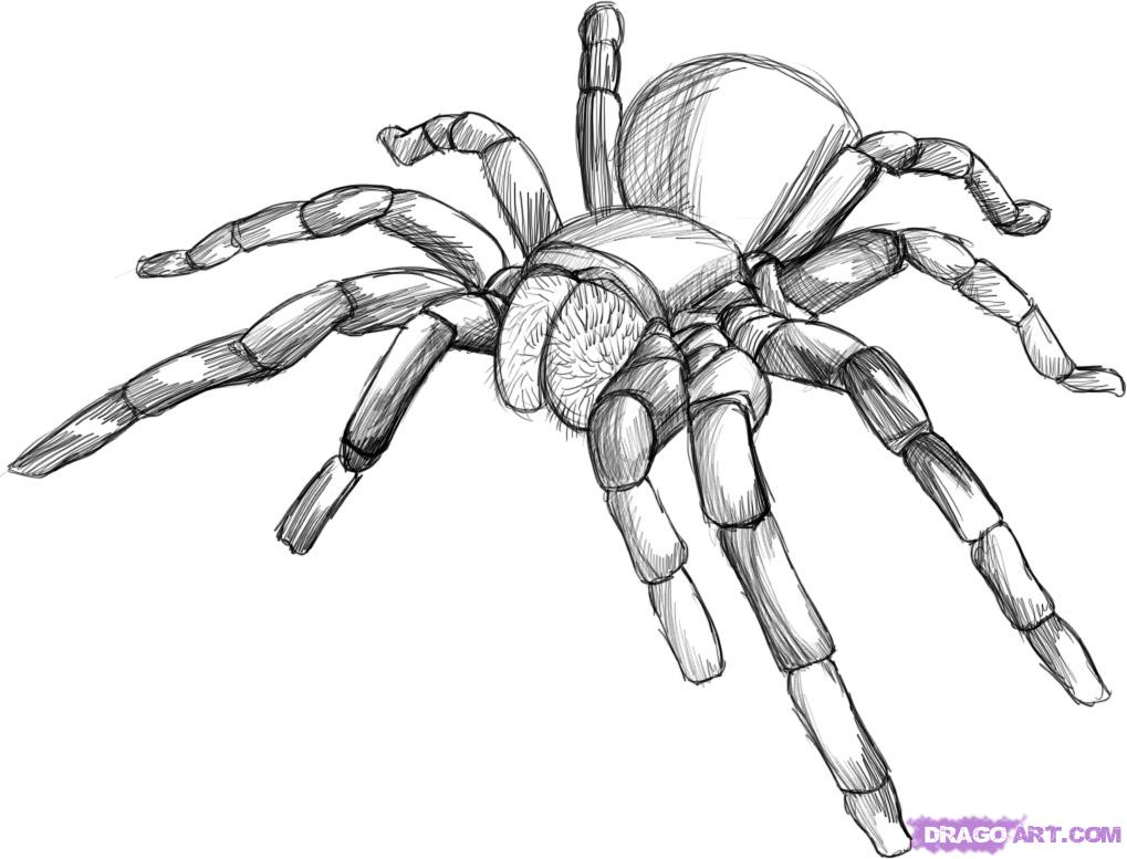 Spider drawing 3d drawing for Easy drawing websites
