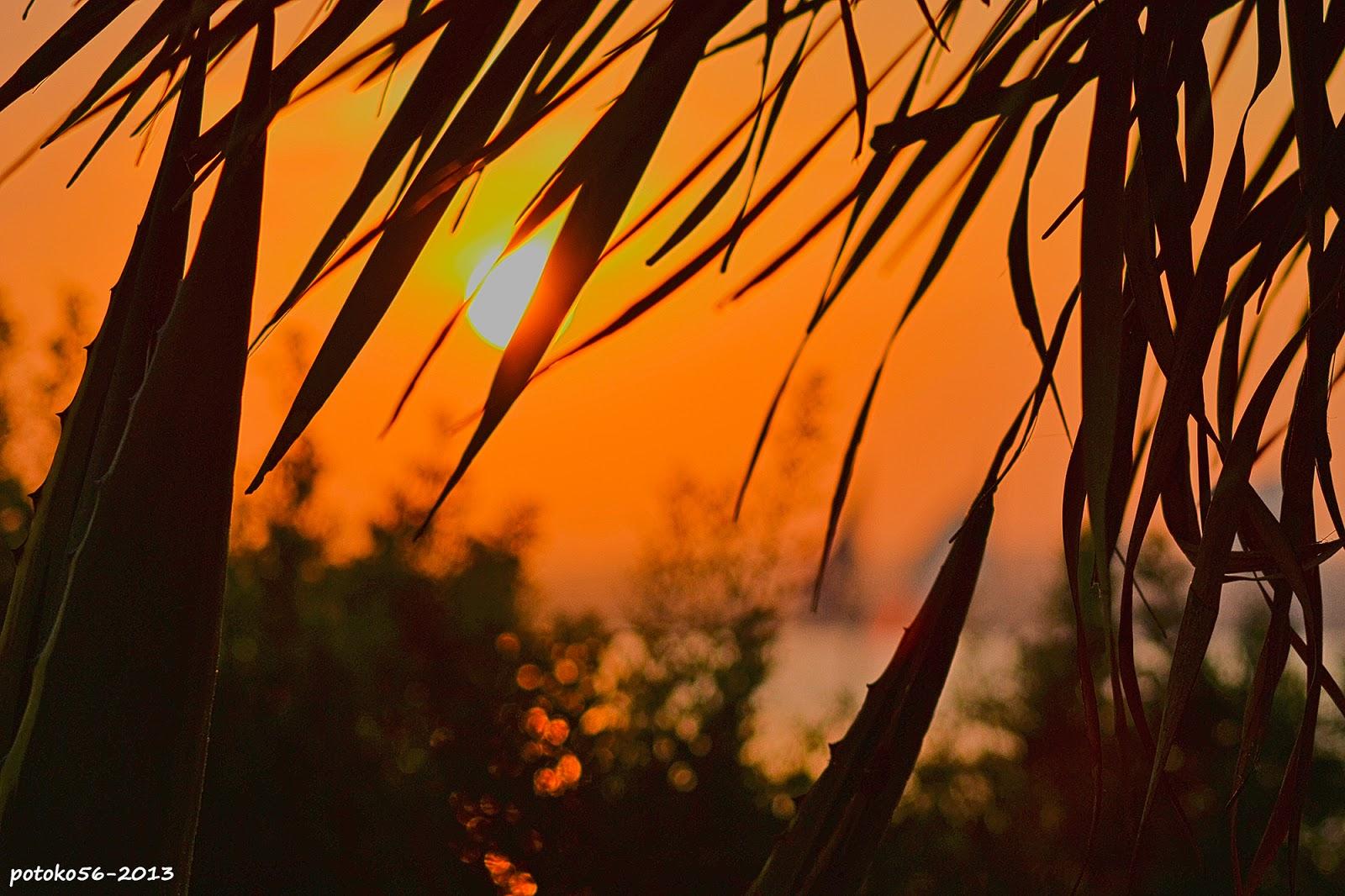sale el sol entre cactus y palmeras Paseo del Chorrillo Rota