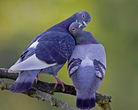 No olvides nunca que el primer beso no se da con la boca...sino con los ojos