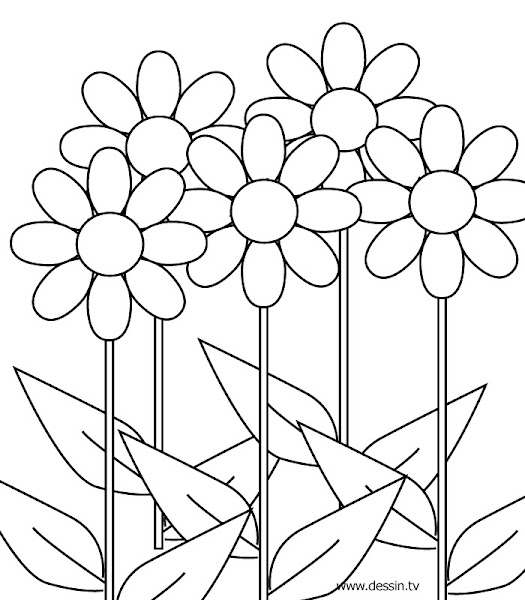 Flower Coloring Pages for Girls 10 and Up