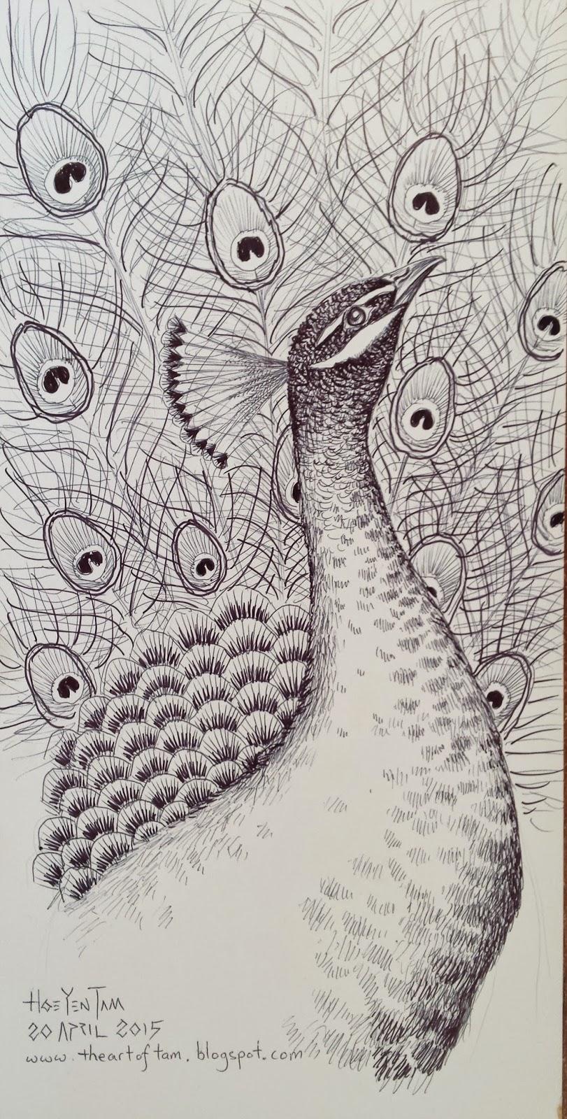 Peacock a pen sketch 2015 孔雀 钢笔素描