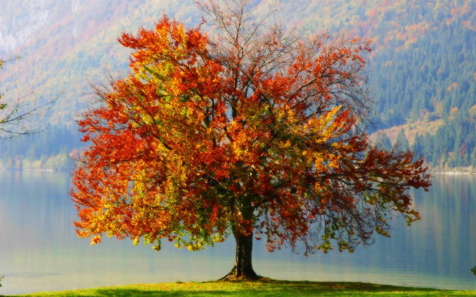Daniel sierra single tree green tree wallpeprs for for Tree wallpaper
