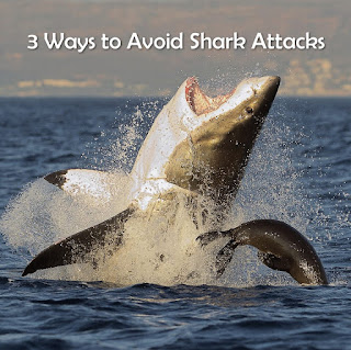 Image of a great white shark attacking a sea lion