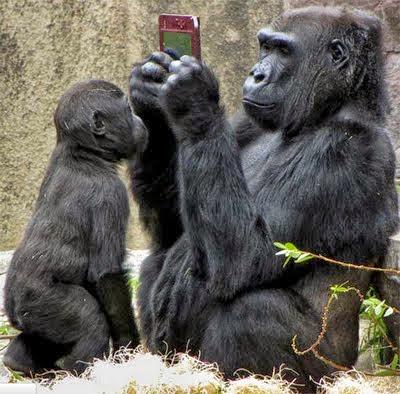 animals-acting-like-humans-Gorilla like human being,monkey like human photos,wild animals look like human being,funniest animals pics,gorilla using mobile phone images,