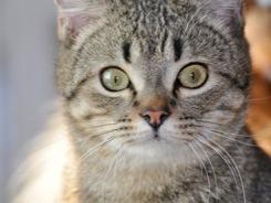 Gatos (la mejor clínica mascotíl)