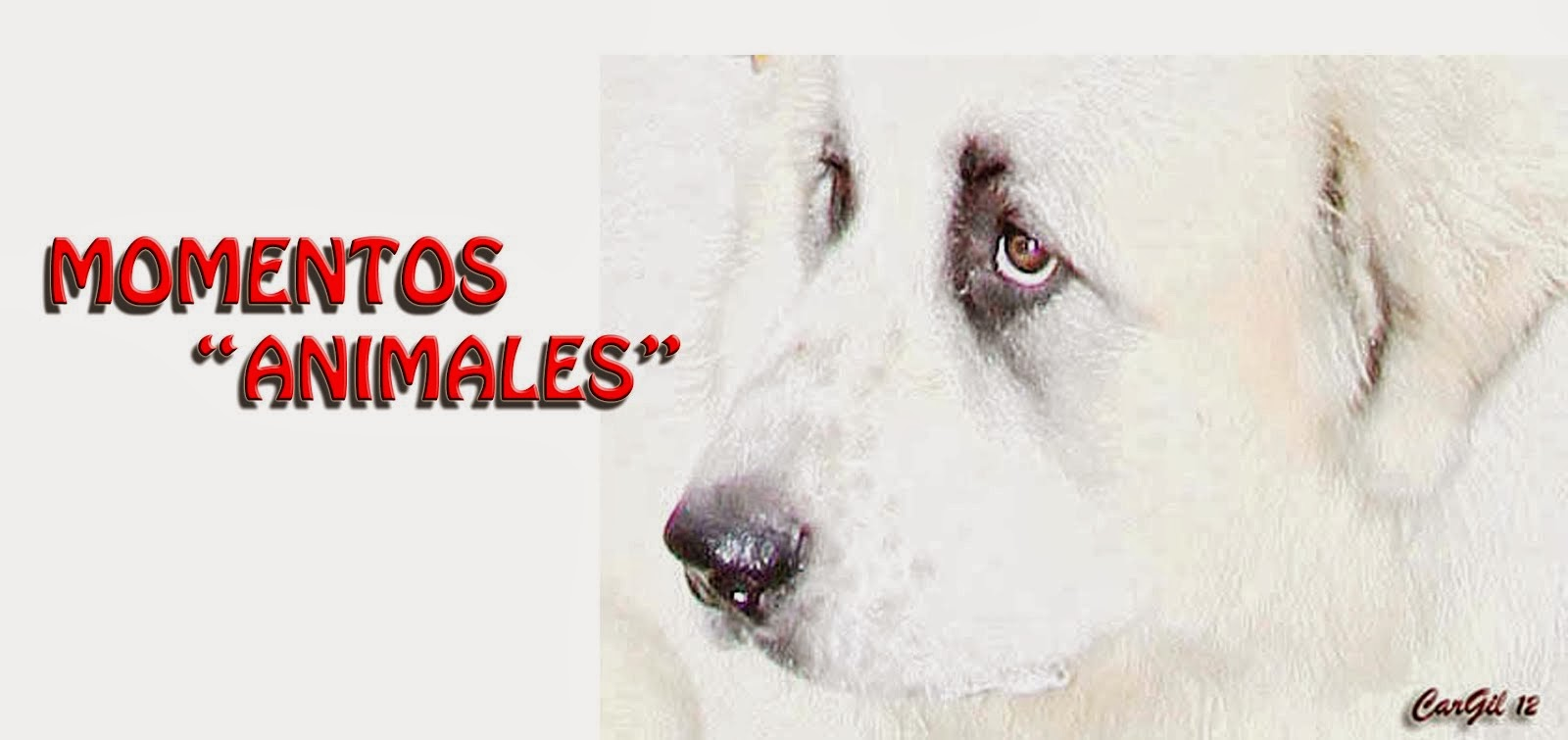 MOMENTOS ANIMALES