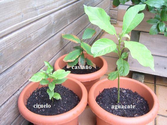 Blog de dorisalon germinando semillas for Plantar hortensias semillas
