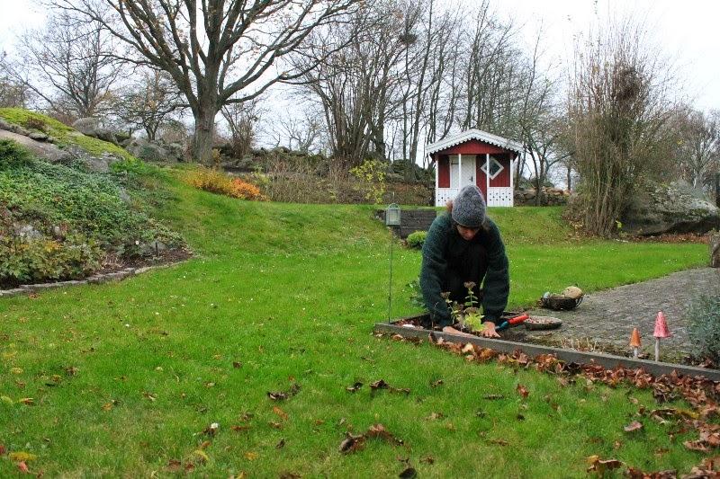 16 novembre in giardino