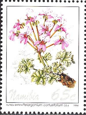 1994 Pelargonium cortusifolium, Namibia