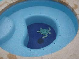اشكال حمامات سباحة 2013 6