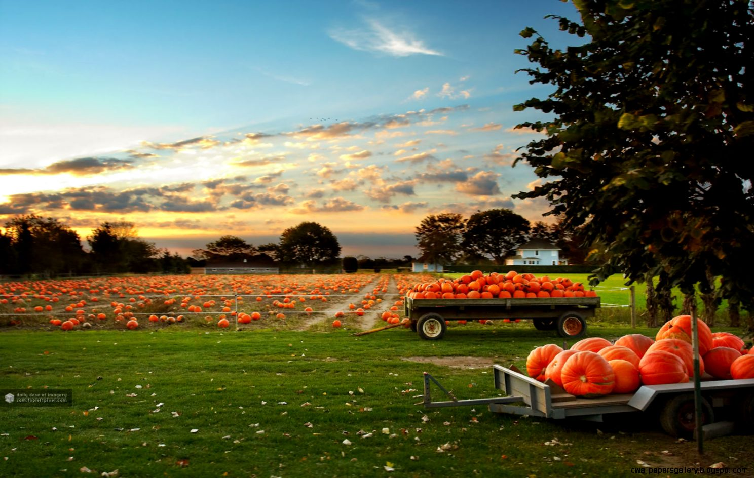 Fall Scene Wallpaper with Pumpkins   WallpaperSafari