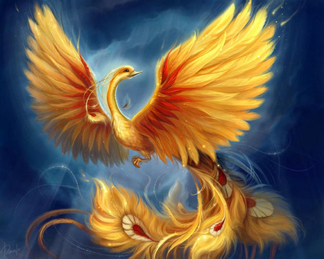gallery for cool phoenix bird wallpaper