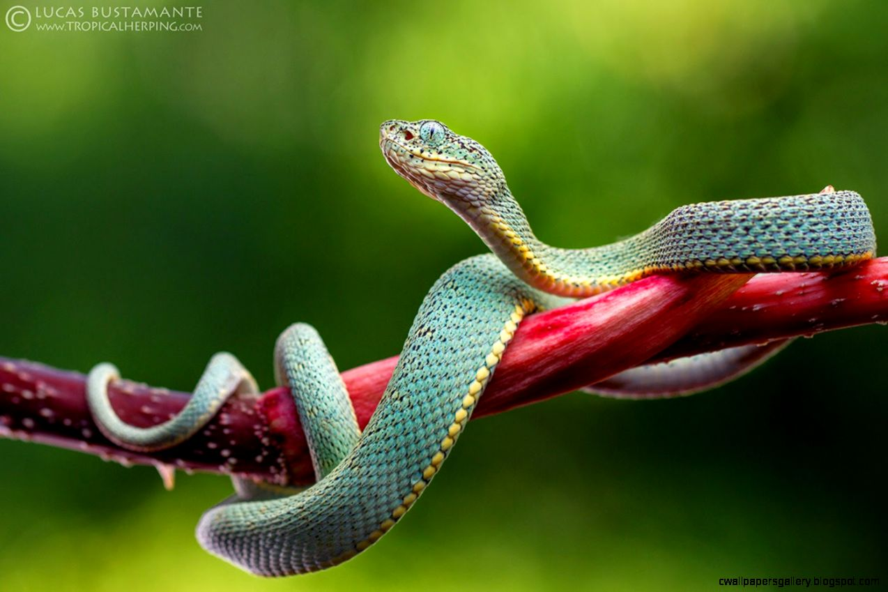 35 Awesome Photos of Rainforest Animals and Wildlife  Peru Nature