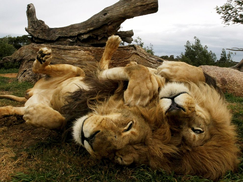 Beautiful Animals Safaris Safari Amazing Beautiful