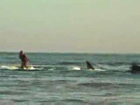 shark fishing and surfing